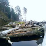 Logs da praia de Rialto Foto de Stock