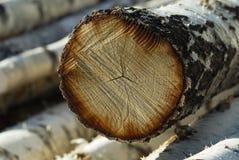 Logs de bouleau Images libres de droits