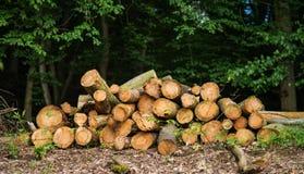 Logs de madeira Fotografia de Stock