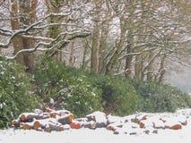Logs de madeira cobertos de neve com árvores atrás Fotos de Stock