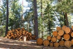 Logs de madeira com a floresta em troncos do fundo das árvores cortadas e empilhadas no primeiro plano, floresta verde no fundo Fotos de Stock Royalty Free