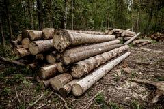 Logs de madeira com a floresta em troncos do fundo das árvores cortadas e empilhadas no primeiro plano, floresta verde no fundo Imagens de Stock Royalty Free