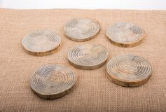 Logs de madeira cortados em partes finas redondas Imagem de Stock