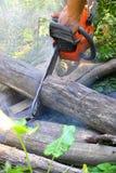 Logs de madeira cortados serra de cadeia Fotografia de Stock Royalty Free