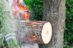 Logs de madeira do corte do homem com serra de cadeia foto de stock