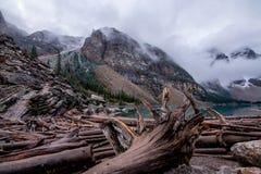 Logs de madeira no lago moraine Foto de Stock
