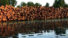 Logs de madeira pelo rio que reflete fora da água filme