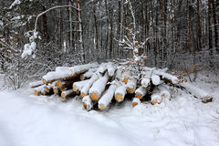 Logs de madeira sob a neve Imagem de Stock Royalty Free