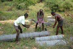 Logs de rachadura do palmyra Fotografia de Stock