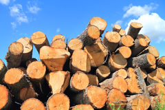 The logs of deciduous trees Stock Photography