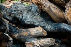 Logs desbastados da madeira foto de stock