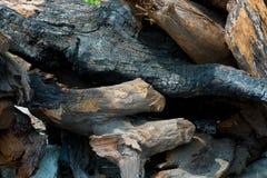 Logs desbastados da madeira imagem de stock