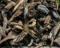 Logs desbastados da madeira imagens de stock royalty free