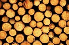 Logs do abeto vermelho do corte da vista imagem de stock royalty free