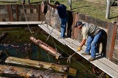 Logs do guincho fora de uma lagoa da serração fotografia de stock