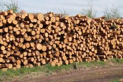 Logs do pinheiro Foto de Stock Royalty Free