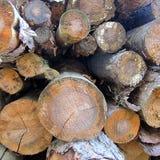 Logs do pinho imagem de stock royalty free