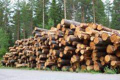 Logs do pinho empilhados pela borda da estrada imagem de stock royalty free