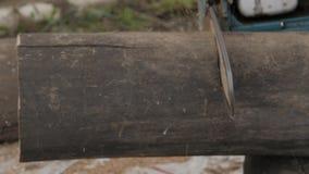 Logs do sawing do homem pela serra de cadeia Movimento lento vídeos de arquivo