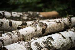 Logs do vidoeiro Foto de Stock