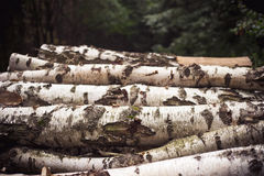 Logs do vidoeiro Fotos de Stock