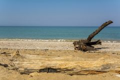 Logs and driftwood lying on the lonely shore. Stock Images