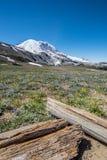 Logs e flores selvagens abaixo do Monte Rainier fotos de stock