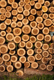 Logs each other Royalty Free Stock Photo