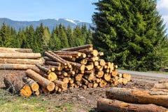 Logs empilhados da madeira colhida ao lado da estrada de floresta, com montanhas imagens de stock royalty free