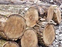 Logs empilhados para a lenha foto de stock