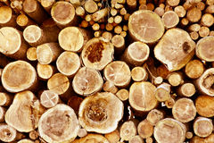 Logs en bois photographie stock