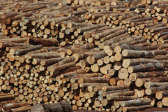 Logs for export. Piles of Pinus radiata logs for export at Port of Lyttleton, South Island, New Zealand royalty free stock image