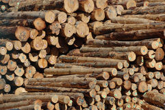 Logs for export Stock Photo