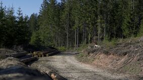 The logs of the felled tree lie on the side of the road.