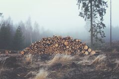 Logs from Felled Trees in a Forest Stock Photography