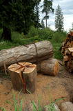 Logs-firewood. Cutting firewood royalty free stock photography