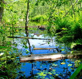 The logs float in forest River. Pine fallen trees floating in the river among the forest of bright summer vegetation Royalty Free Stock Photos