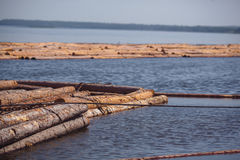 Logs floating on river Royalty Free Stock Image