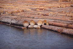 Logs floating on river Royalty Free Stock Images