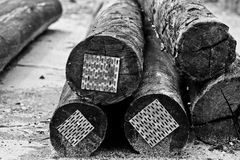 Logs in the floor Stock Photo
