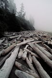 Logs on foggy beach Stock Images