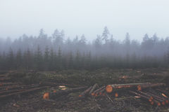 Logs in foggy forest Royalty Free Stock Photo