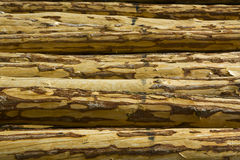 Logs in Forest. ( outdoor shot Stock Images