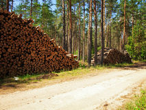 Logs in the forest Stock Image