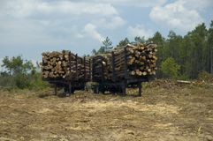 Logs and forest. Trailers holding recently cut logs. Area surrounding trailers has been clear cut stock photos