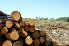 Logs at Forest Clear Cut stock photography