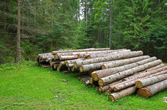 Logs in the forest Stock Photos