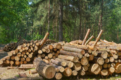 Logs in the forest Royalty Free Stock Photos