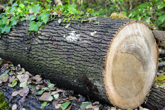 Logs in a forest Stock Image