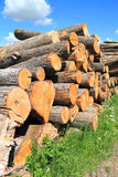 Logs forest products Stock Photo